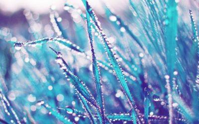 Nové barvy modré trávy – bluegrass vroce 1977 / Vmodrém stínu